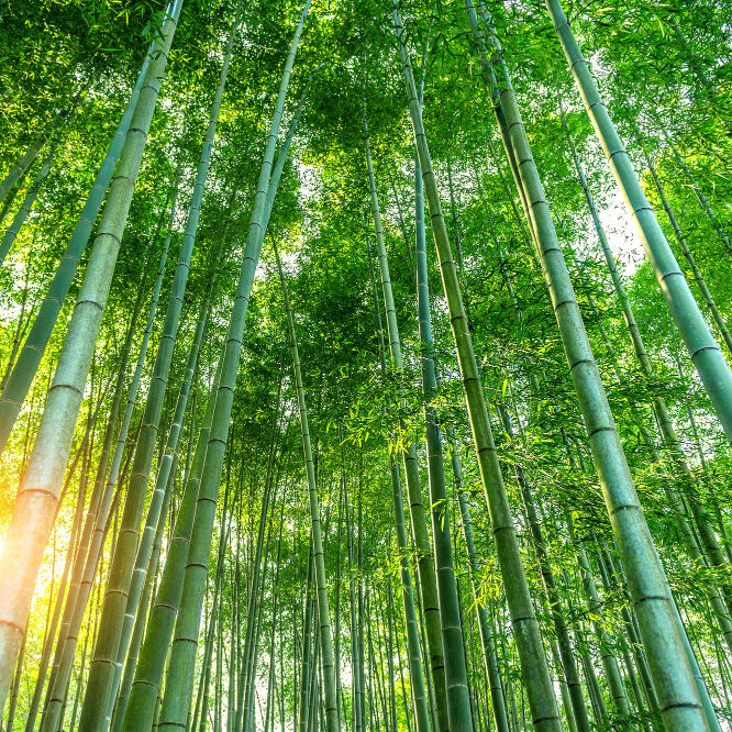 bamboo-forest-nature-background